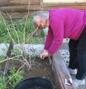 Leslie planting radishes