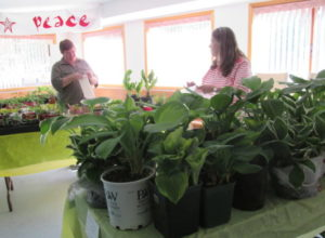 Mary and Susan pricing plants