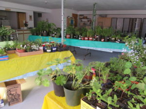 plants before sale